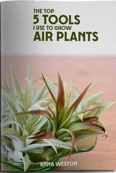 Air plants are slow growing plants, but you can give yours a boost that will assist your air plants in producing pups (babies) and colorful flowers. Planting Succulents, Garden Plants, House Plants, Planting Flowers, Moss Garden, Succulent Planters, Cactus Plants, Planter Garden, Succulent Containers