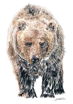 "Sad bear. Repinned by Elizabeth VanBuskirk, author of ""Beyond the Stones of Machu Picchu"" a collection of stories and three folk tales about Inca life today. See the tale about the bear whose mother is a young Inca woman. Very sad but expresses the Inca idea of transformation."