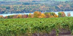 Offbeat Upstate New York: 5 ways to get weird in the Finger Lakes #travel #roadtrips #roadtrippers