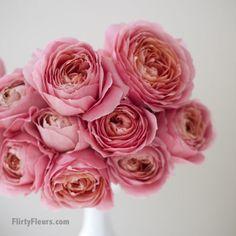 Flirty Fleurs Pink Garden Roses Study with Alexandra Farms - Romantic Antike garden rose