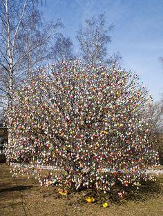 German Easter Egg Tree  http://www.eierbaum-saalfeld.de/?seite=geschichte=eng
