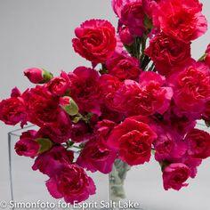 """Satisfaction"" hot pink mini carnation"