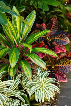 Tropical Backyard Landscaping, Tropical Patio, Tropical Garden Design, Florida Landscaping, Backyard Plants, Garden Landscape Design, Outdoor Landscaping, Outdoor Plants, Front Yard Landscaping