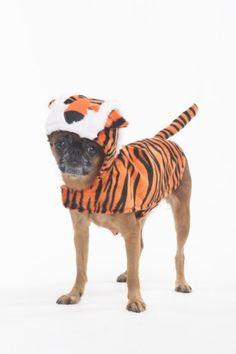 Fashion Pet Halloween Tiger Costume for Dogs XSmall * Read more at the image link.