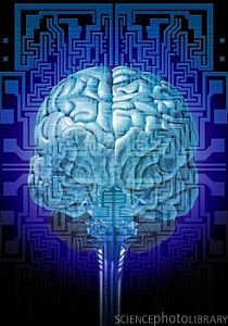 How early life experience can affect adult behaviour. http://psychcentral.com/blog/archives/2013/06/14/brain-chemistry-altered-by-early-life-experience-part-1/?utm_source=dlvr.it_medium=facebook