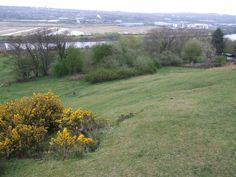 Summerhill bank looking over the RiverTyne