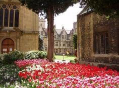 "atlantic-saints:"" Tulips at Balliol College, Oxford"" Balliol College, Oxford United Kingdom, Oxford City, Building Photography, Church Music, Oxford England, Church Building, Dream City, British Isles"