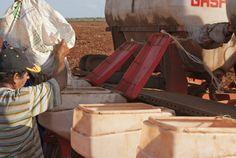 Campesino carga semillas de frijoles en una sembradora. Foto:Aíxa Lòpez