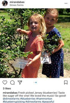 Kids love picking blueberries near the Jersey Shore