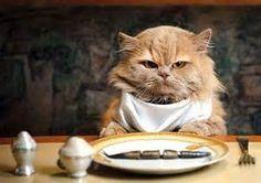 Poniéndome elegante para comer.
