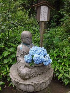 [Country] Meigetsuin-temple in Kamakura  鎌倉 明月院の花想い地蔵