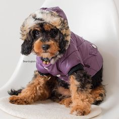 Purple is totally my colour  photo by @dimages.com.au #dogsofinstagram #pupinpurple #dogmodel by beardogtails