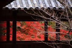 普通に眺めるより風情が感じられる紅葉