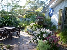 Our front courtyard filled with Australian native plants, including many orchids