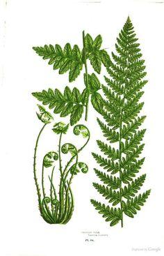 Flowering Plants, Grasses, Sedges, & Ferns - Anne Pratt, Edward Step - Google Books