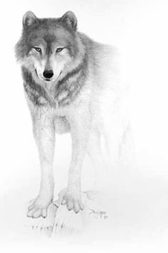 Beautiful wolf drawing