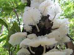 Mushrooms - these are so pretty