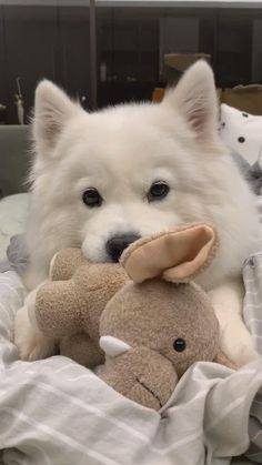 Cute Baby Dogs, Baby Animals Super Cute, Cute Funny Dogs, Cute Little Puppies, Cute Cats And Dogs, Cute Dogs And Puppies, Cute Little Animals, Cute Funny Animals, Animals And Pets