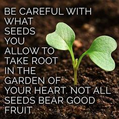 Be careful what seeds take root said garden quotes, inspirat Faith Quotes, Words Quotes, Wise Words, Life Quotes, Quotable Quotes, Random Quotes, Seed Quotes, Drake Quotes, Devotional Quotes
