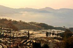 Terraces 梯田 Yuanyang, Yunnan, China 雲南 元陽