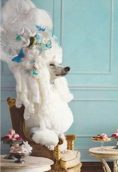 French poodle - should we hire one for the corner!!! #poodle