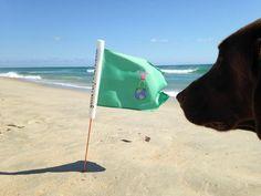 #beachgolf #golfeverywhere #urbangolf