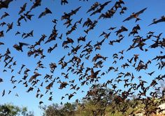 Calling all bat fans, the Pima County Natural Resources, Parks and Recreation is hosting a bat viewing night on Friday.