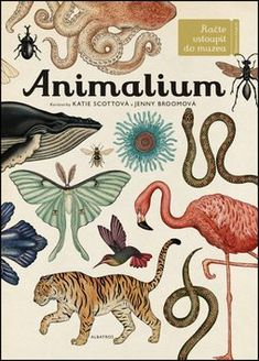 Animalium cover, curated by Katie Scott and Jenny Broom. Illustrated by Katie Scott, Hardcover Katie Scott, Sibylla Merian, Illustrator, The Animals, Collections Of Objects, Ink Illustrations, Bird Illustration, Animal Kingdom, Childrens Books