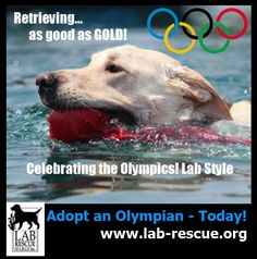 Lab Rescue Olympic Themed Poster - Please Share