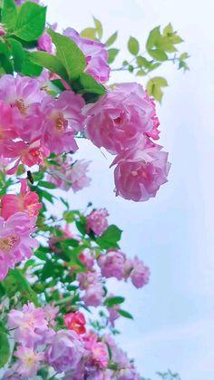 Beautiful Flowers Hd Wallpapers, Beautiful Flower Drawings, Wallpaper Nature Flowers, Beautiful Landscape Wallpaper, Beautiful Flowers Pictures, Flower Background Wallpaper, Beautiful Rose Flowers, Flower Phone Wallpaper, Flower Backgrounds