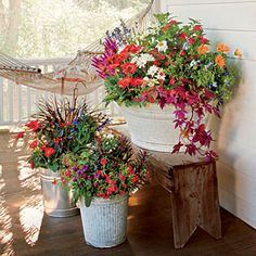 Bargain Blooms - Spectacular Container Gardening Ideas - Southern Living - Recreate this look with gerbera daisies, salvias, shasta daisies, daylilies, and sweet potato vines. Flower Planters, Container Flowers, Garden Container, Outdoor Flower Pots, Full Sun Container Plants, Evergreen Container, Metal Planters, Container Gardening Vegetables, Small Plants