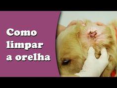 Como limpar orelha do seu cachorro - YouTube