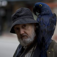 Birdman of Gastown...