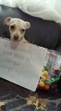 Selling gum to pay for the sofa I destroyed. Funny Animal Memes, Funny Dogs, Funny Animals, Cute Animals, Funny Memes, Animals And Pets, Baby Animals, Funny Spanish Memes, Best Memes