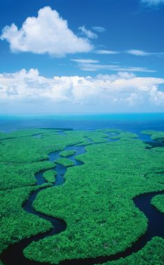 Everglades National Park | Travel | Vacation Ideas | Road Trip | Places to Visit | Homestead | FL | Tourist Attraction | National Park | Nature Reserve