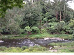 Creek at Warburton, Victoria, Australia