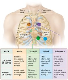 Module 17.4 Mechanical Physiology of the Heart: The Cardiac Cycle: Human Anatomy and Physiology