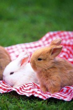 Bunny Picnic | Cutest Paw