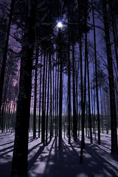 Moonlight by totheforest, via Flickr