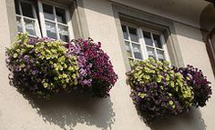 these are some of the most beautiful window boxes of flowers I've ever seen - took this photo in Sept 2009, Bregenz, Austria