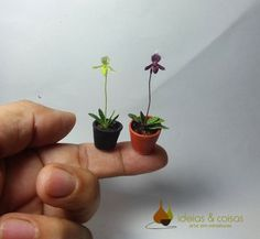 Miniature  orchid ( Lady slipper). Crafted in cold porcelain modeling clay.