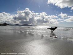 Pepper at Ruakaka Beach by metservice.nz, via Flickr