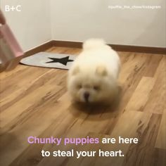These puppies are fluffy!
