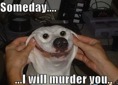 Oh my heavens. HAHAHAHA!!!! The face...the face!!!  Humor  LOL  Funny pictures  Funny memes  Dogs  Funny animals  Someday 