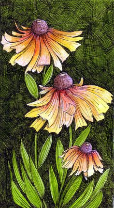 Coloured Heleniums3 by Artwyrd worked in acrylic inks on white watercolour paper using dippy nib pens and a 0.25mm Rotring Rapidograph pen.