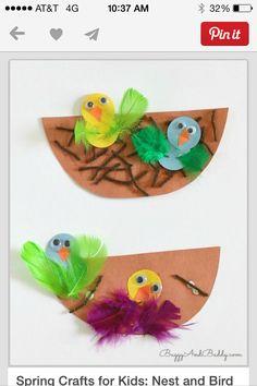 Nest & birds activity