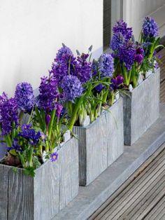 A Contemporary Blue Spring Garden - Jardins Sans Secret. Garden Border Plants, Garden Borders, Blue Spring Flowers, Onion Flower, Purple Garden, Spring Bulbs, Blue Springs, Tiny Flowers, Spring Garden