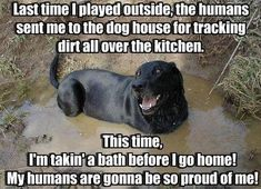 25 funny dog memes that feature a picture of a pooch and a funny caption written by a human. Animal Captions, Funny Captions, Picture Captions, Dog Quotes Funny, Funny Dogs, Funny Animals, Pet Quotes, Funny Humor, Hilarious Sayings