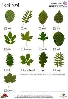 Leaf Chart
