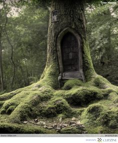 "Stunning Tree Houses. Reminds me of ""Brambly Hedge,"" except this is more elvish then country mouse like..."